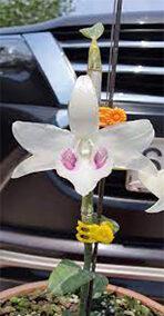 hoa phong lan 5ct bảo duy